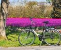 Holland Highlights Cycling Holidays